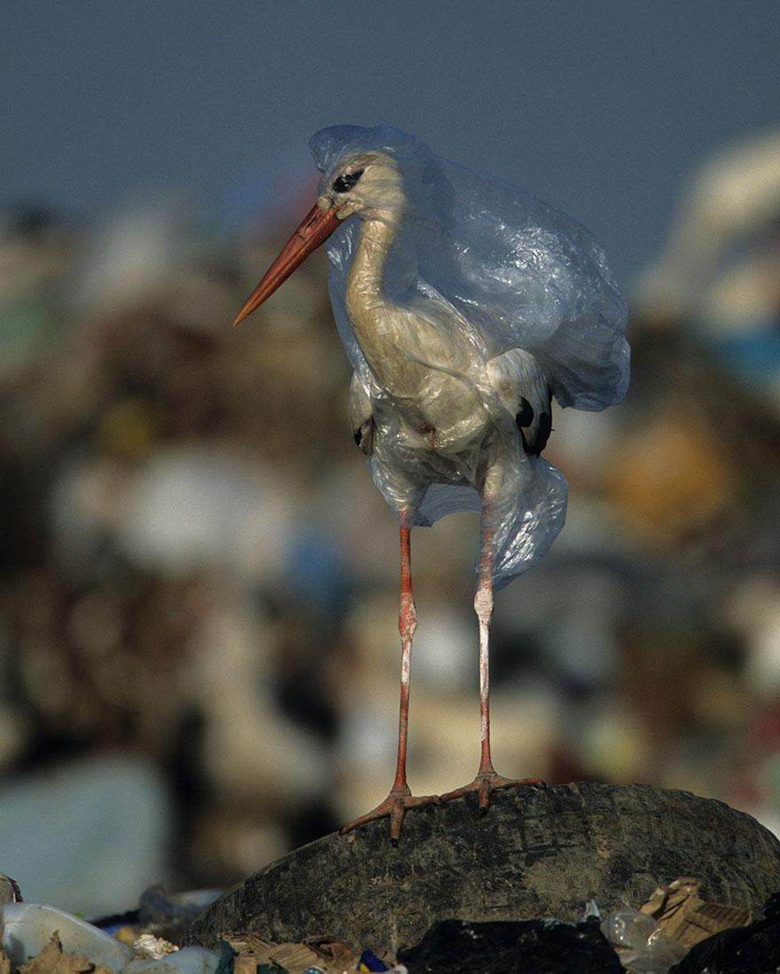 plastic<em>planet</em>3.jpg